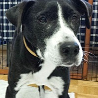 Adopt A Pet :: Elsa - Duluth, GA