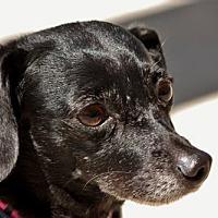 Adopt A Pet :: Joni - Portland, OR