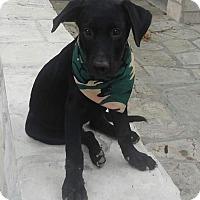 Adopt A Pet :: Rocko - Del Rio, TX