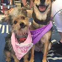 Adopt A Pet :: Allie - Scottsdale, AZ