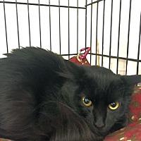 Adopt A Pet :: Cammie - Lunenburg, MA