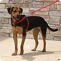 Adopt A Pet :: May - Newcastle, OK