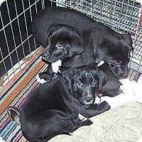 Adopt A Pet :: 2boys & 1 girl - Denver, IN