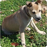Adopt A Pet :: Bitty - San Diego, CA