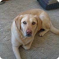 Adopt A Pet :: Baily - Windsor, MO