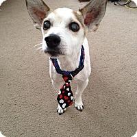 Adopt A Pet :: Parker - Miami, FL