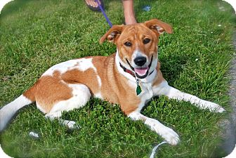 Terrier (Unknown Type, Small) Mix Dog for adoption in Franklin, Indiana - Benelli