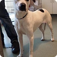 Adopt A Pet :: Minka - Westminster, CA