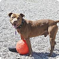 Adopt A Pet :: Monty - Port Clinton, OH