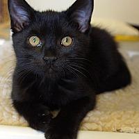 Adopt A Pet :: Angus - Maynardville, TN