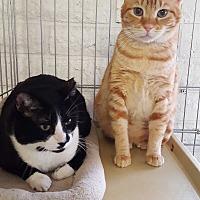 Adopt A Pet :: JESSIE&WINSTON - Phoenix, AZ