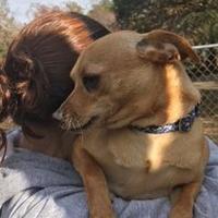 Adopt A Pet :: Mulder - Hopkins, SC