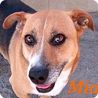 Adopt A Pet :: Mia - El Cajon, CA