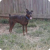 Adopt A Pet :: Rocket - Thomasville, NC