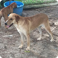 Adopt A Pet :: Marley. - Slidell, LA