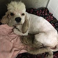 Adopt A Pet :: Manchester - Los Angeles, CA