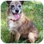 Photo 1 - Corgi/Cairn Terrier Mix Dog for adoption in Nashville, Tennessee - Brittney- Adopted