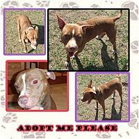 Adopt A Pet :: Rock - Orlando, FL