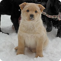 Adopt A Pet :: Glaxy - Hamilton, ON