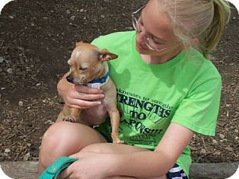 Chihuahua Mix Dog for adoption in Newburgh, Indiana - Buddy TAKE ME HOME