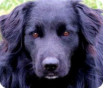 Golden Retriever/Labrador Retriever Mix Dog for adoption in Winchester, Kentucky - TY(WHAT A STORY!!   PLS READ!!