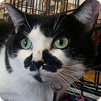 Adopt A Pet :: Bekka Bella - Edmond, OK