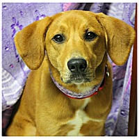 Adopt A Pet :: Clementine - Forked River, NJ