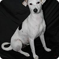 Adopt A Pet :: Majic - Lufkin, TX