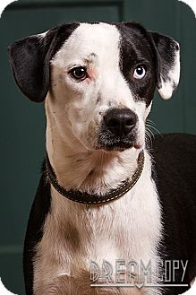 Beagle Mix Dog for adoption in Owensboro, Kentucky - Sherman