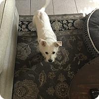 Adopt A Pet :: Einstein - Fair Oaks Ranch, TX