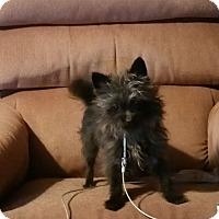 Adopt A Pet :: KAOS - Ortonville, MI