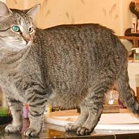 Adopt A Pet :: Tabby - Hartford, KY