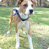 Adopt A Pet :: Waldo - Mocksville, NC