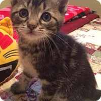 Adopt A Pet :: Alatar - River Edge, NJ