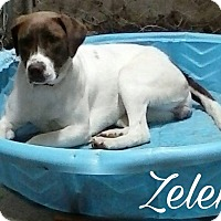 Adopt A Pet :: Zelena - Union City, TN
