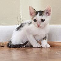 Adopt A Pet :: Tulip - Homewood, AL