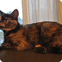 Adopt A Pet :: Sunny - Des Moines, IA