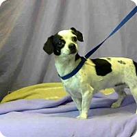 Adopt A Pet :: URGENT on 6/27@DEVORE San Bern - San Bernardino, CA