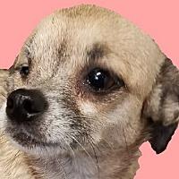 Adopt A Pet :: Wiggles - Lexington, KY