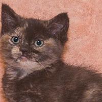 Adopt A Pet :: Jenny - Elmwood Park, NJ