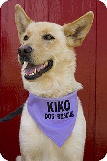 Labrador Retriever/Shepherd (Unknown Type) Mix Dog for adoption in Rigaud, Quebec - Jolene
