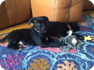 German Shepherd Dog/Labrador Retriever Mix Puppy for adoption in Roswell, Georgia - Esmerelda