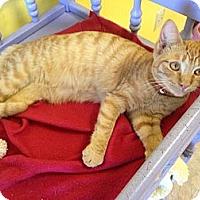 Adopt A Pet :: Summer - Mobile, AL