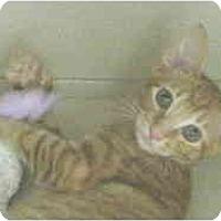 Adopt A Pet :: Simba - Mesa, AZ