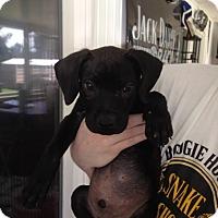 Adopt A Pet :: Wyatt-adoption in progress - Marshfield, MA