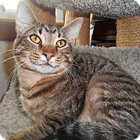 Adopt A Pet :: Bob - Richland, MI