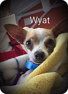 Chihuahua Mix Dog for adoption in Encinitas (San Diego), California - Wyat