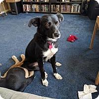 Adopt A Pet :: Shmi-Adopted - Saskatoon, SK