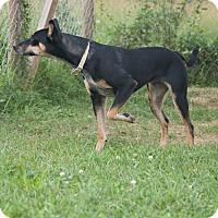 Adopt A Pet :: Batavia - Delaware, OH