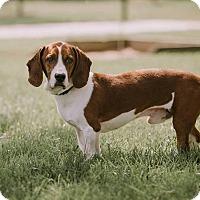 Adopt A Pet :: Timmie - Alexandria, VA